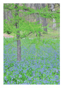 Tree with Forget-me-nots